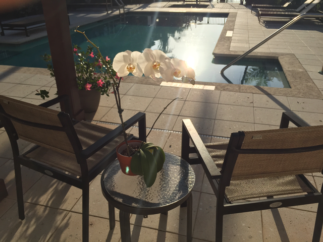 Customer's pool at sunrise with extended lounging area